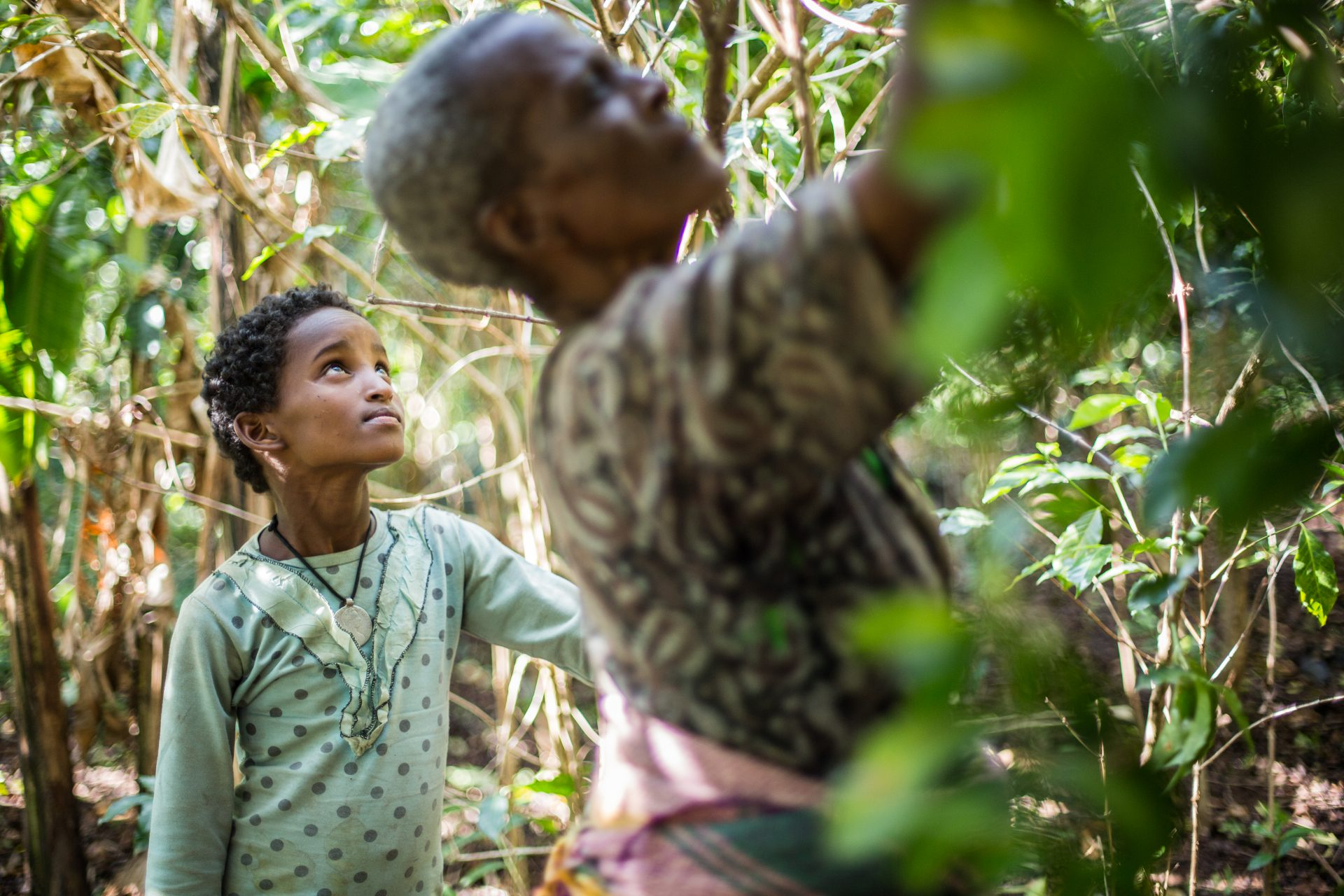 Amelework, 9, watches and learns as her grandmother picks coffee in Mankusa, West Gojjam, Ethiopia. ©WaterAid/Genaye Eshetu