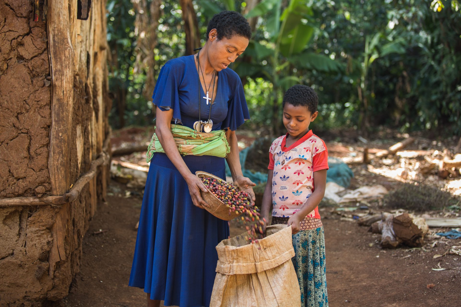 Bosena helps her mother Bernesh Mekonnen, approximately 40, with storing the coffee beans picked on their farm in Mankusa, West Gojjam, Ethiopia. ©WaterAid/GenayeEshetu