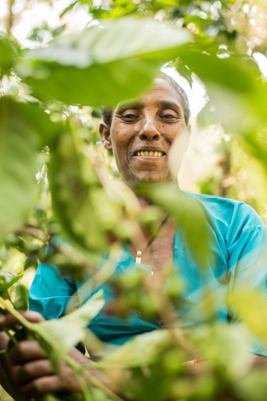 Medihanit Semure, picking coffee on her farm in Woynima, West Gojjam, Ethiopia. ©WaterAid/Genaye Eshetu
