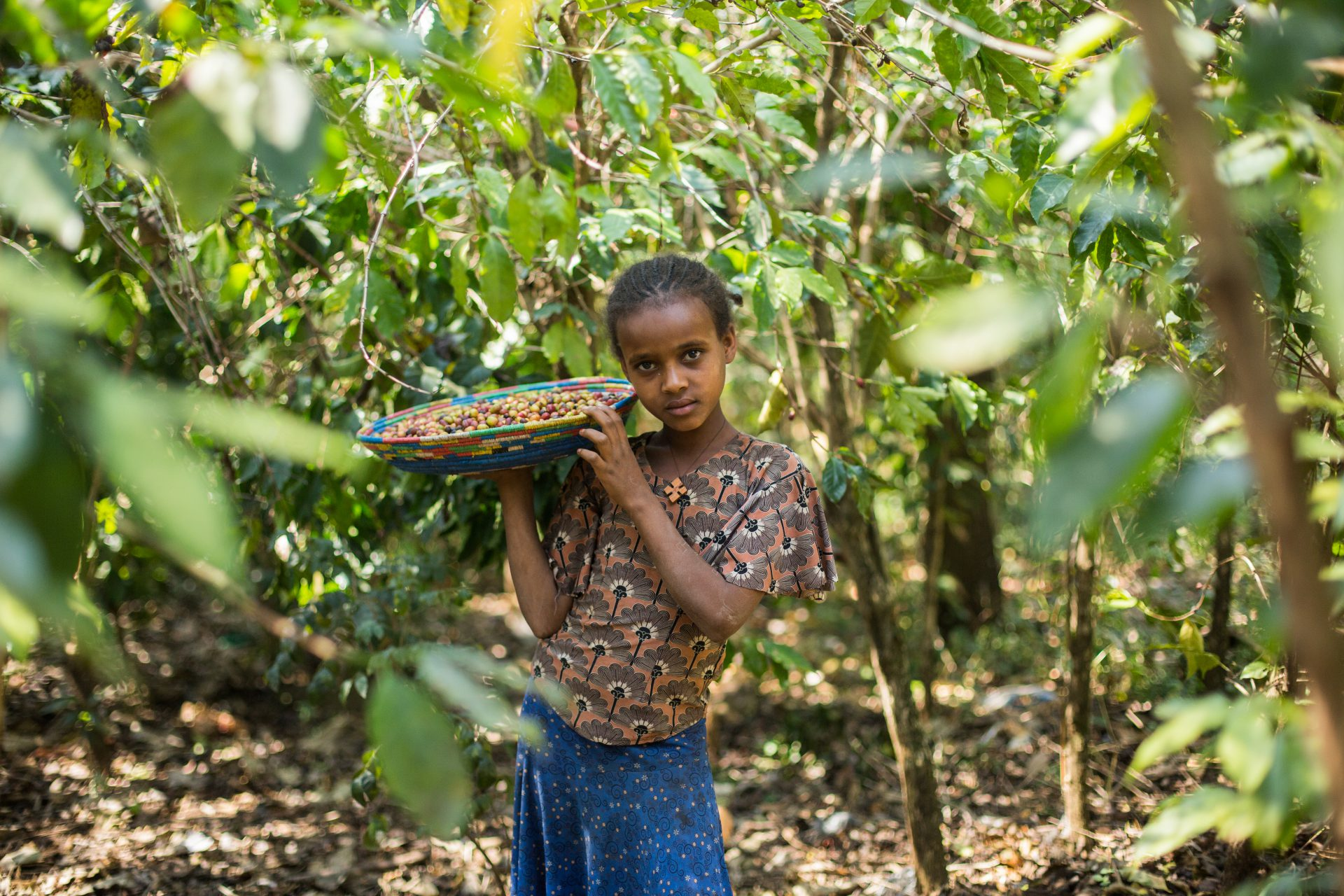 A girl picking coffee in Woyinima village, West Gojjam, Ethiopia ©WaterAid/Genaye Eshetu
