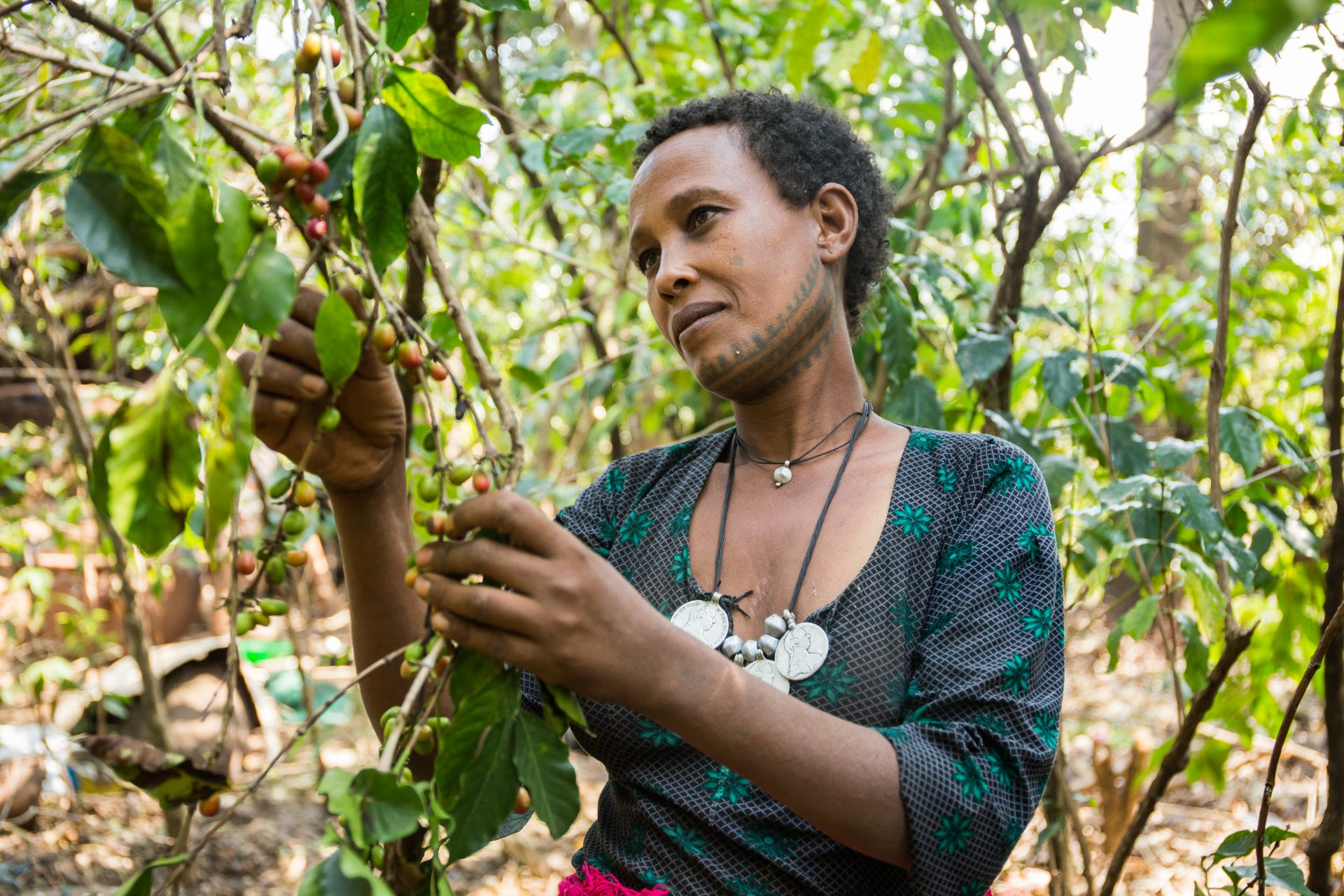 Zimam Fettene, 25, picking coffee at her farm in Woyinima village, West Gojjam, Ethiopia. ©WaterAid/Genaye Eshetu